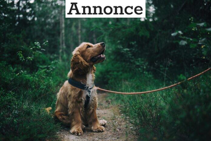 Luft din hund i al slags vejr